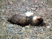 The cat lies on the beach on the pebbles royalty free stock photos