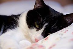 The cat lies Stock Photos