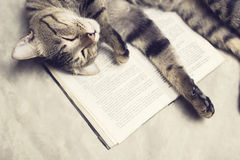 Cat lies on a book Stock Images