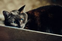Brooding black cat royalty free stock photography