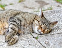 Cat lies on the floor outdoor Royalty Free Stock Photos