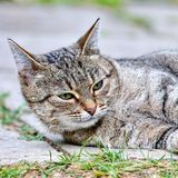 Cat lies on the floor outdoor royalty free stock photography