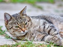 Cat lies on the floor outdoor Stock Images