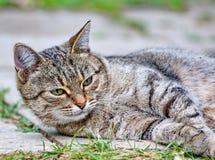 Cat lies on the floor outdoor Stock Images