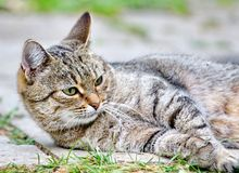 Cat lies on the floor outdoor stock photography