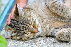 Cat lies on the floor outdoor Stock Photography