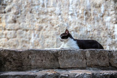 Cat lies in front of the stone wall. Royalty Free Stock Photography