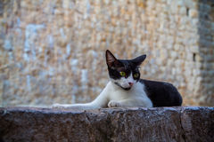 Cat lies in front of the stone wall. Stock Image