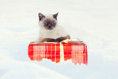 The cat lies on the gift box Royalty Free Stock Photo