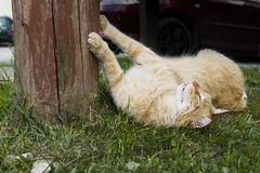 The cat lies on the grass. A rural domestic cat resting after eating. Moggy cat is lying under a tree stock photo