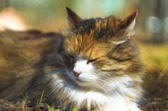 The cat lies on the grass, warms under the sun, is about to fall Royalty Free Stock Photo