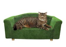 Cat lies on a green divan. The cat is lying on the green divan. White background. Isolated stock photo