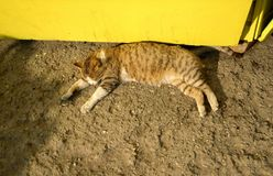 The cat lies on the ground Stock Images