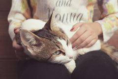 Cat lies on the lap of a girl. A beautiful cat lies on the lap of a girl. A girl is stroking a cat Stock Images