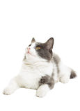 Cat lies Stock Image