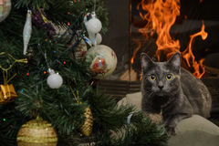Cat. Lies Near The Christmas Tree In Front Of Fireplace Stock Photo