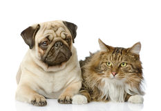 The cat lies near a dog. Stock Photos