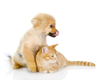 The cat lies near a dog. looking away Royalty Free Stock Photography