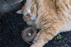 The cat lies next to the nest that fell from the branch Stock Photos