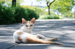 Cat lies on pavement Royalty Free Stock Images