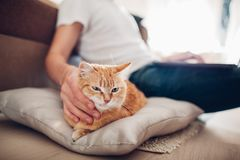 The cat lies on a pillow at home near his master stock photography