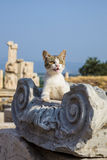 The cat lies on the ruins. Of Ephesus stock photo