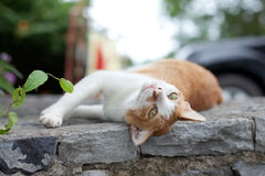 The cat lies on a stone. The red cat lies and to luxuriate on a stone Stock Photos