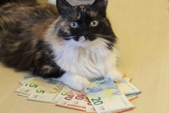The cat lies on banknotes of 5, 10, 20 euros stock photo