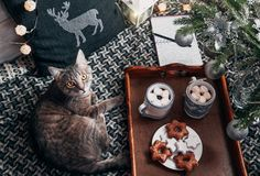 Cat lies by the tray with hot chocolate under the Christmas tree. Cat lies by the tray with hot chocolate and biscuits under the Christmas tree Stock Image