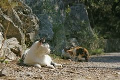 Cat lies and two kittens aside at ground Royalty Free Stock Images