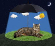 Cat under a umbrella Royalty Free Stock Image