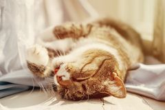 Cat lies and washes the paws stock image