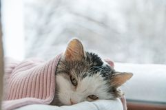 Cat lies on the window in winter Stock Images