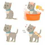 Cat life. Cute gray cat adventures. Cute cartoon cat isolated on white background royalty free illustration