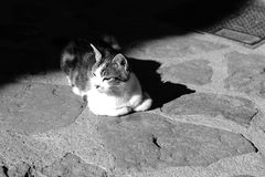 Cat life. In a small town in Italy, a happy inhabitant is lying in the sun Stock Images