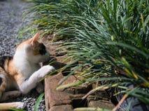 Cat Lifes Leg colorée par trois sur une brique Images libres de droits