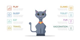 Cat Lifestyle Infographic Stock Photography
