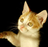 Cat in light. Took the chance to capture my friend's kitten in the late afternoon Royalty Free Stock Photography