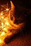 Cat with Lights stock photo