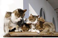 Cat-like family. 5 cat-like family members sleep on a bench Stock Photography
