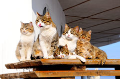 Cat-like family. 5 cat-like family members sit on a bench Royalty Free Stock Images