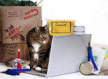 Cat On-Line Shopping Frenzy. Tabby cat with obsessive shopping disorder intently focused on computer screen while buying cat food, treats and toys on line. Cat Royalty Free Stock Images