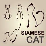 Cat Line siamesa Fotografía de archivo