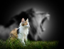 Cat with lion shadow. Small cat with big angry male lion shadow Stock Image