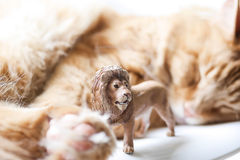 Cat with Lion toy Stock Photography