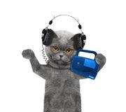 Cat listening to music and dancing Royalty Free Stock Images