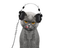 Cat listening to music and enjoy it Stock Photography
