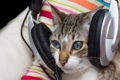 Cat listening to music Stock Image