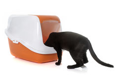 Cat and litter box. In front of white background stock photos