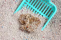 Cat Litter with cat sand scoop Stock Images